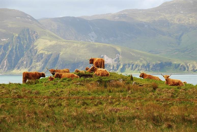 Feed supplement can lower cows' methane emissions by 30%