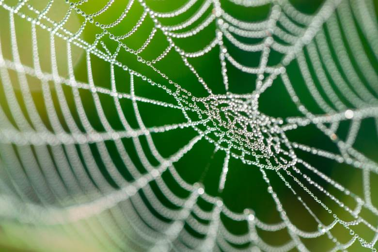 Fresh developments from spider silk maker
