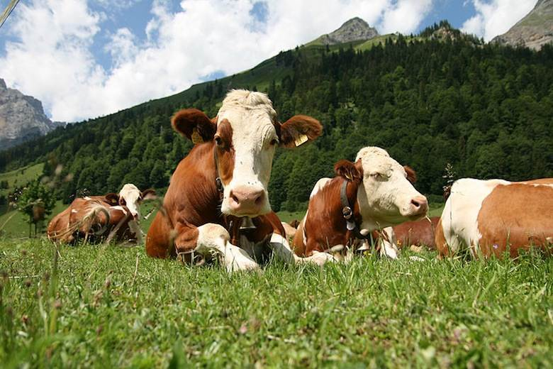 Global Roundtable for Sustainable Beef to launch leather initiative